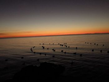 Keep up with the number of ducks showing up on roosting areas to predict when hunting will be the best.